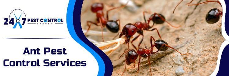 Some Ant Facts You Should Be Aware Of