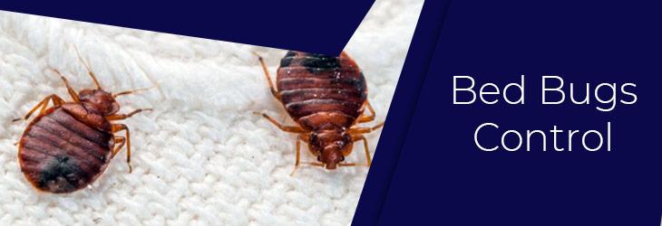 Bedbugs Control Sydney