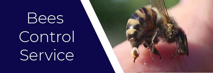Bees Control Sydney