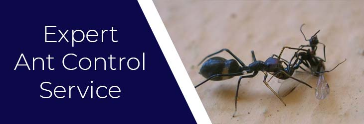 Expert Ant Control