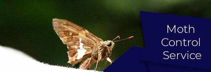 Moth Control Service