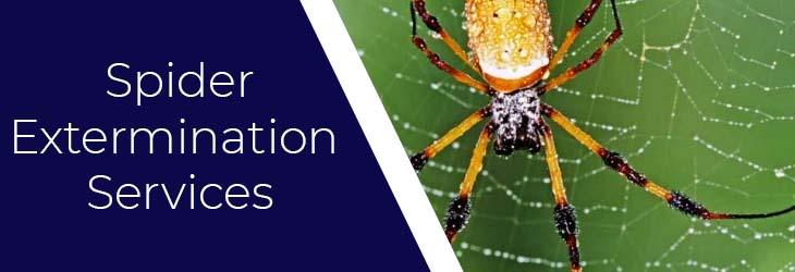 Spider Extermination Services