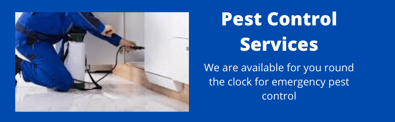 Tips For Preventing And Controlling Pest Infestations