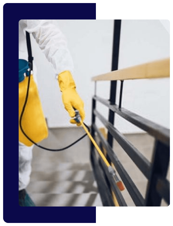 247 Pest Control Service In Sydney