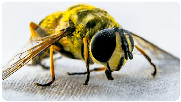 Wasp Removal Sydney